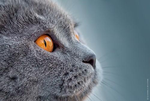 Mèo được biết đến là như một người bạn thân thiết của loài người. Mèo luôn khoan thai, chậm rãi, nũng nịu và sang trọng. Sự thân mật giữa mèo và con người đã có từ rất lâu đời, chúng xuất hiện trong các truyền thuyết của nhiều nền văn hóa, từ Ai Cập cổ đại, Trung Hoa huyền bí cho đến tận phương trời Châu Âu. Hôm nay Hanoi Arena xin giới thiệu với bạn những bức ảnh đẹp nhất về loài vật quyến rũ này.